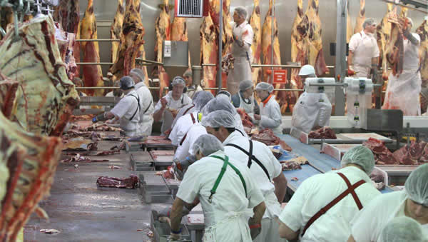 Greenhams' Smithton abattoir. The meat processing company is looking to sell grass-fed beef into the US. Picture: Grant Wells.